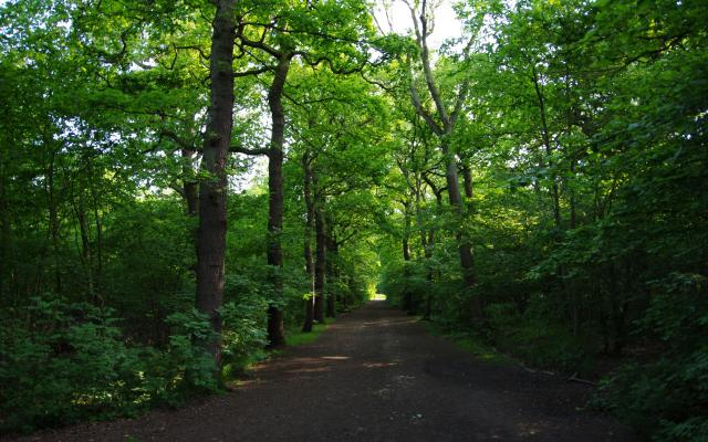 Oxleas Wood, London